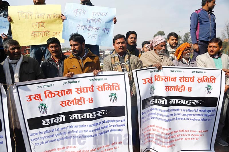 Sugarcane farmers staging a protest demanding payments sugar mill owners owe them, at Maitighar Mandala, in Kathmandu, on Tuesday, December 31, 2019. Photo: THT
