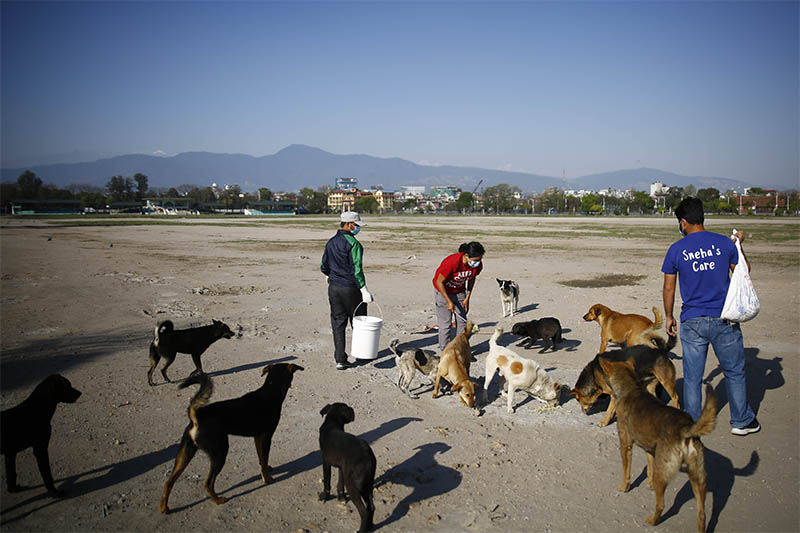 Sneha Shrestha and her team Sneha's Care feed stray dogs on the seventh day of the government imposed nationwide lockdown amid concerns over coronavirus pandemic in Kathmandu, on Monday, March 30, 2020. Photo: Skanda Gautam/THT