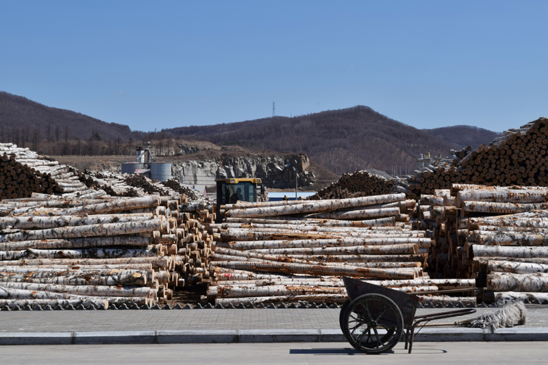 Logs are seen at a wood factory following an outbreak of the coronavirus disease (COVID-19), in Suifenhe, a city bordering Russia in China's Heilongjiang province, April 15, 2020.  Photo: Reuters