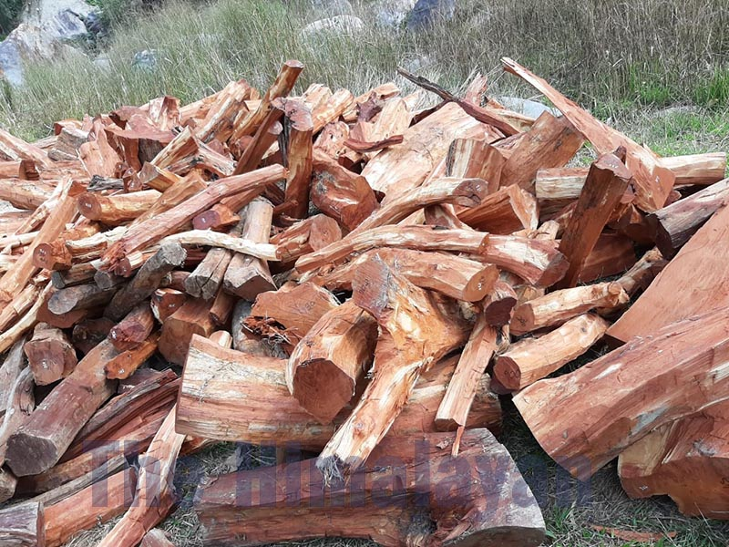 FILE - A huge pile of catechu timbers seized by the Division Forest Office, Dhading, on Saturday, April 11, 2020. Photo: Keshav Adhikari/THT