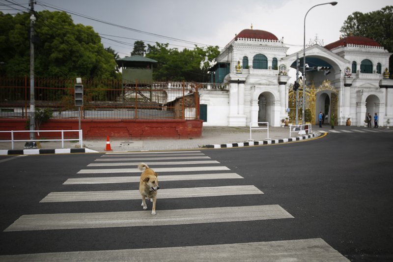 A dog crosses a deserted road, around Singh Durbar, Kathmandu, on the 25th day of government-imposed natiowide lockdown, on Friday, April 17, 2020. Photo: Skanda Gautam/THT