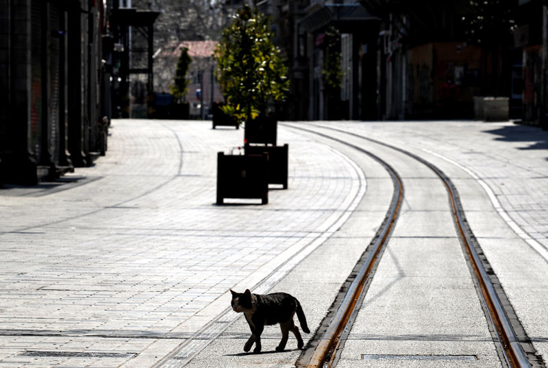A cat walks on the deserted Istiklal Street during a two-day curfew which was imposed to prevent the spread of the coronavirus disease (COVID-19), in Istanbul, Turkey, April 11, 2020. Photo: Reuters