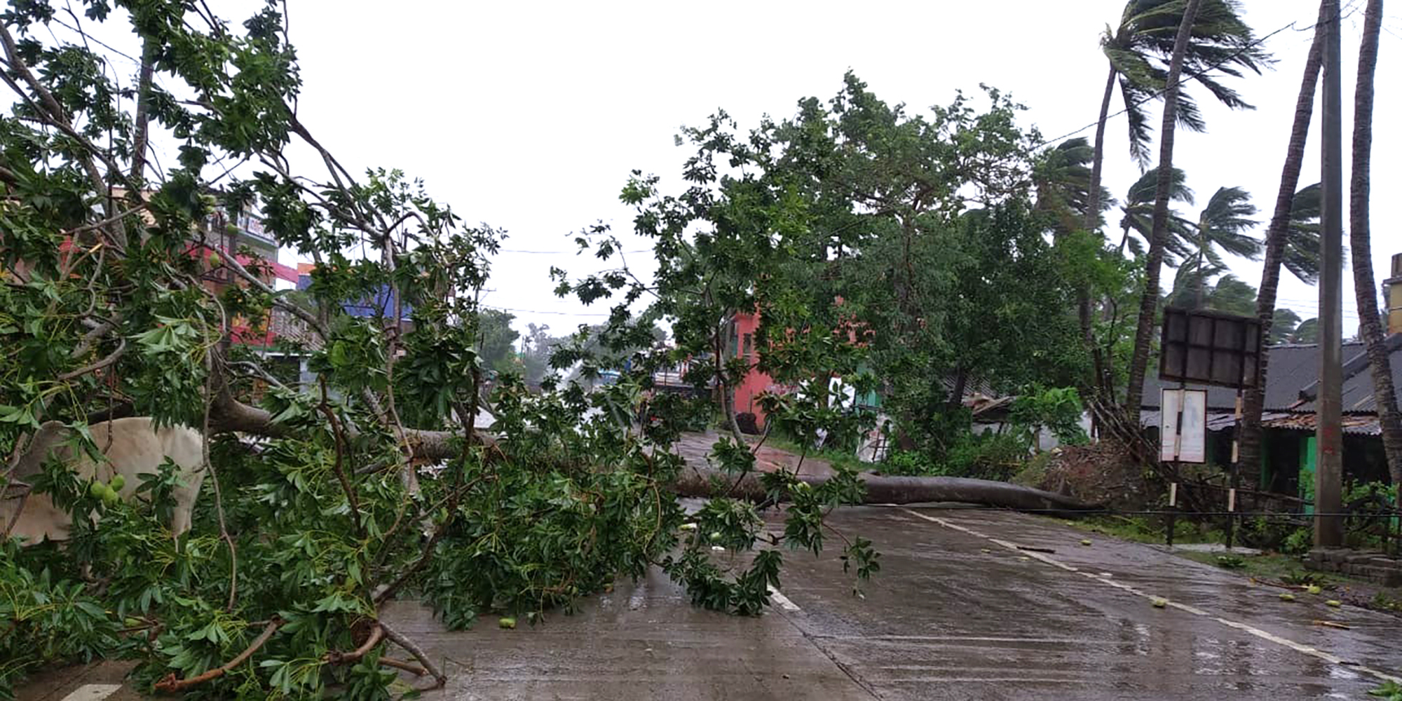Trees lie uprooted on a highway from heavy winds ahead of Cyclone Amphan landfall, at Chandbali on the Bay of Bengal coast in Orissa, India, Wednesday, May 20, 2020. A powerful cyclone is moving toward India and Bangladesh as authorities try to evacuate millions of people while maintaining social distancing. Cyclone Amphan is expected to make landfall on Wednesday afternoon, May 20, 2020, and forecasters are warning of extensive damage from high winds, heavy rainfall, tidal waves and some flooding in crowded cities like Kolkata. (AP Photo)