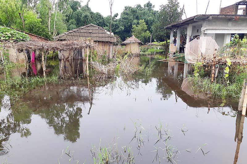 This image shows houses submerged in rainwater in Shreepur, Kalaiya Sub-metropolitan City-24, Bara district, on Friday, July 31, 2020. Photo: Puspa Raj Khatiwada/THT
