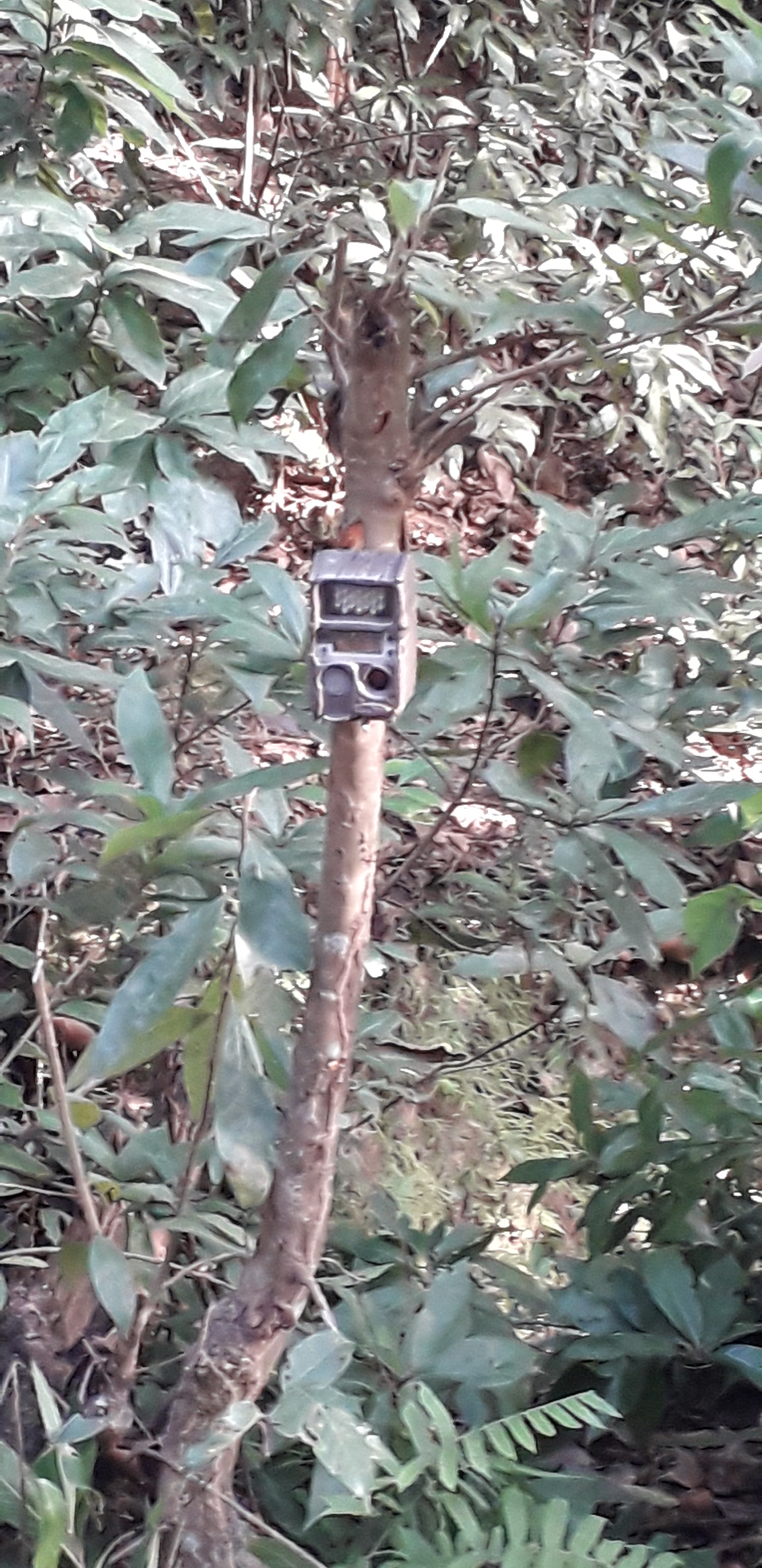 The type of camera traps that is being installed in the forest area of Bhanu Municipality in Tanahun. Photo: Madan Wagle/THT
