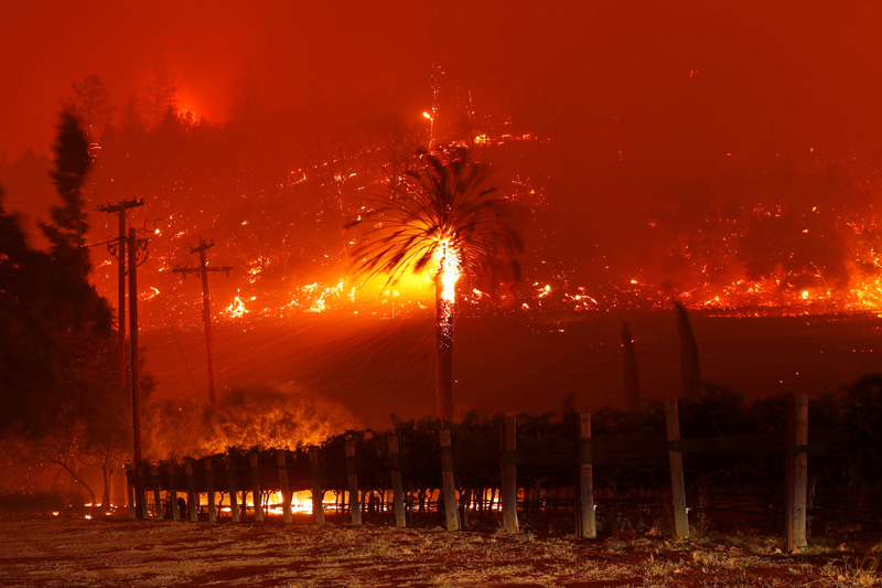 Embers fly from a burning tree above a vineyard during the Glass Fire in St. Helena, California, U.S. September 27, 2020. Photo: Reuters