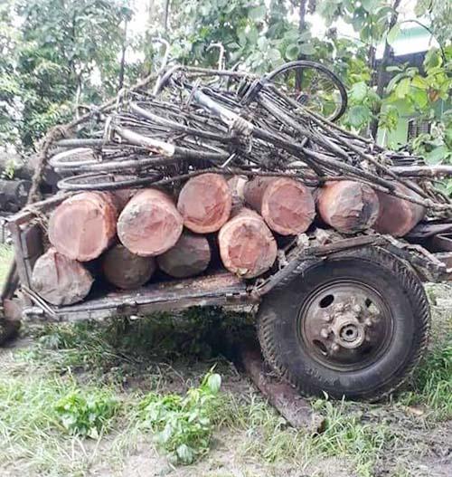 This undated image shows seized logs of sal and bicycles kept on the premises of Partnership Forest community Office, Dumarwana, Bara district. Photo: Pushpa Raj Khatiwada/THT