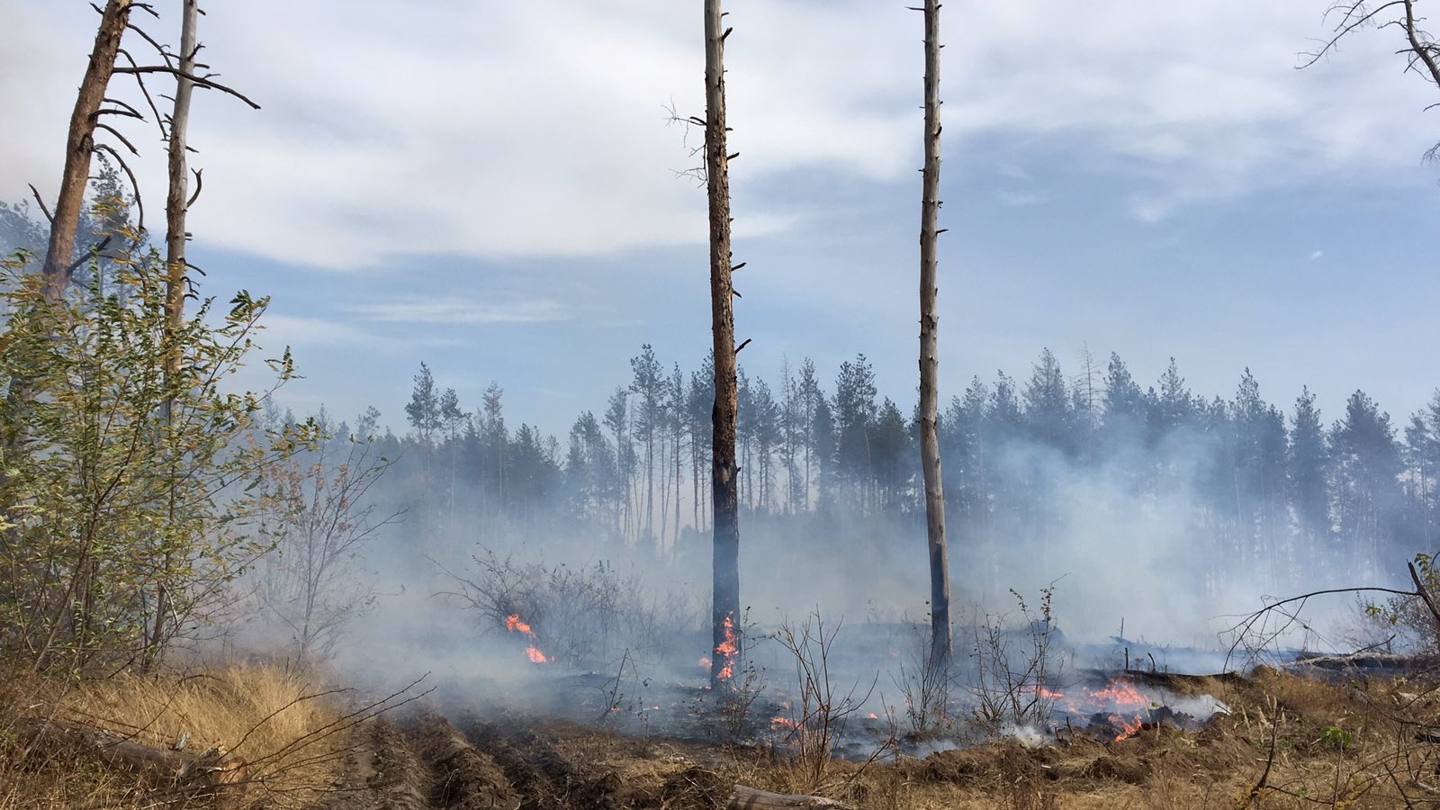 Fire burns in a forest in Luhansk region, Ukraine in this handout picture released September 30, 2020. Photo: State Emergency Service Of Ukraine/Handout via Reuters