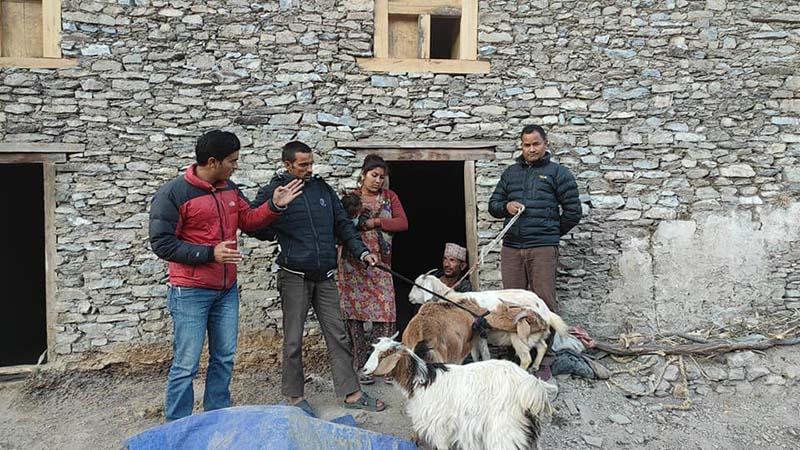 This image shows Shanti Sewa Griha representatives handing over three nanny goats to Dhana Bahadur Rawat in Rawatwada of Budhinanda Municipality-1 in Bajura district, on Thursday, December 17, 2020. Photo: Prakash Singh/THT