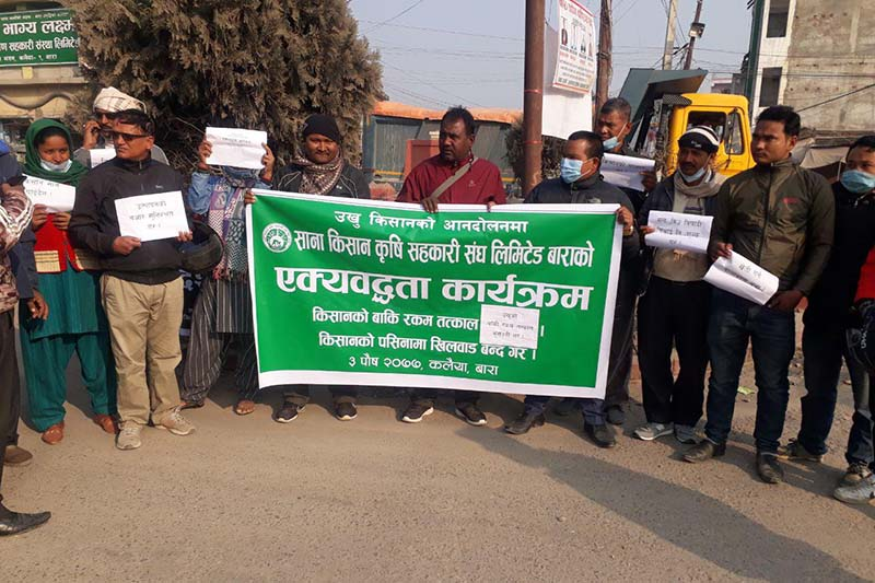Small Farmers Agriculture Cooperatives Association Limited, Bara stages protest rally to expressed its solidarity with sugarcane farmersu2019 agitation, at Bharatchowk in Bara district headquarters Kalaiya, on Friday, December 18, 2020. Photo: Pushpa Raj Khatiwada/THT