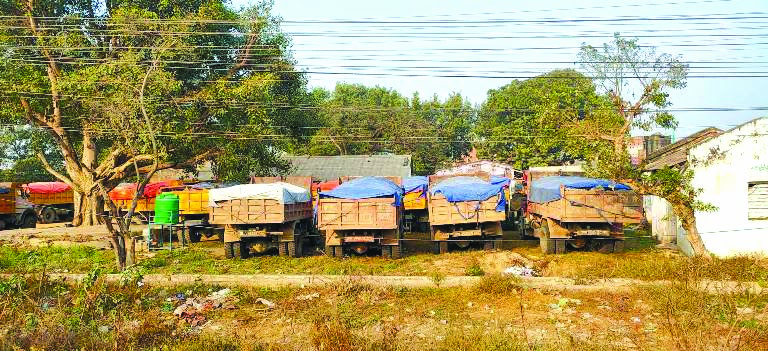 Tippers seized by Traffic Police for loading limestone beyond their carrying capacity at Golbazaar, on Tuesday. Photo: THT